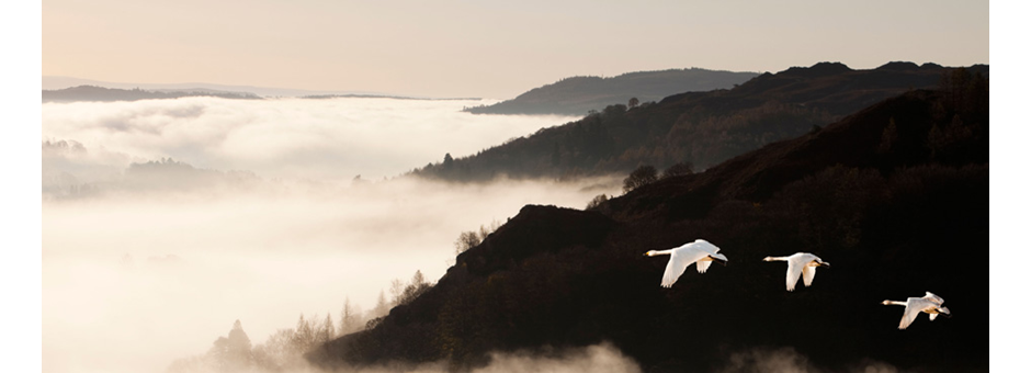 nouvel_an-brouillard_oiseau-visuel